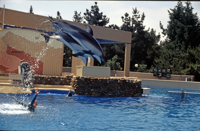 Die Haltung von Delfinen …