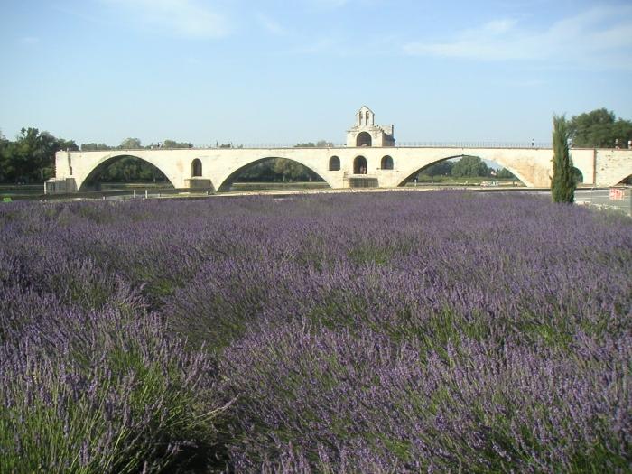 Lavendel und das Lied …