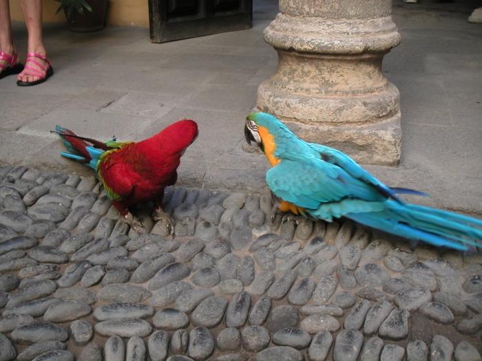 Frei fliegende Kakadus …