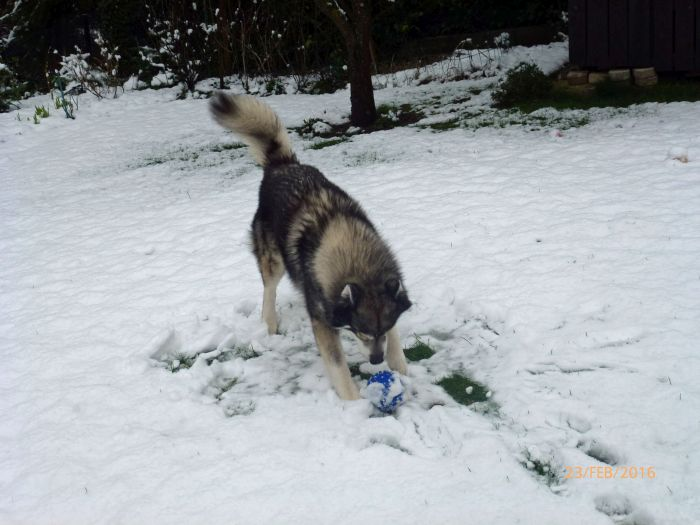 Der erste richtige Schnee …